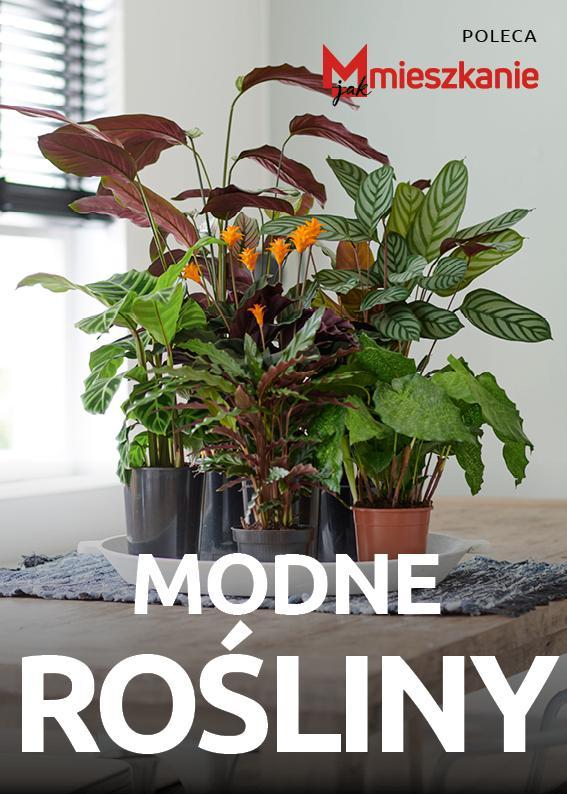 Modne rośliny