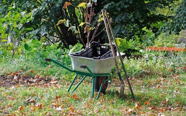 Co trzeba zrobić w ogrodzie w październiku